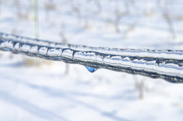 ice in the vineyard