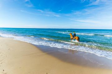 Horse ride at the beach