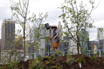 A person works on a floating barge, which is planted with fruit trees, with the Manhattan skyline in the background, as part of the Swale project called a collaborative floating forest, in the East River in the Brooklyn borough of New York