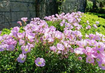 Hedge of wild flowers