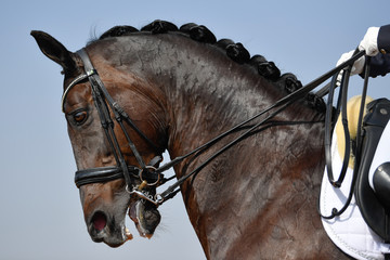 Close up on a horse head during a dressage competition