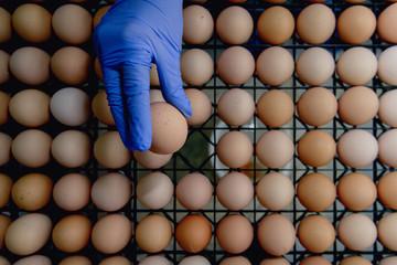 raw egg inpecting