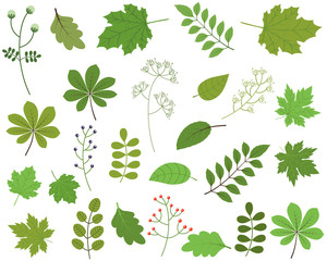 Green leaves vector set on white background, spring and summer foliage