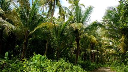schmaler Weg durch grünen Palmenwald in Südostasien