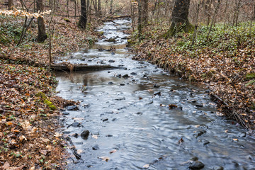 Small Stream in the Woods