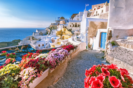 Scenic view of traditional cycladic houses on small street with flowers in foreground, Oia village, Santorini, Greece. Sunset view point. Holidays background.