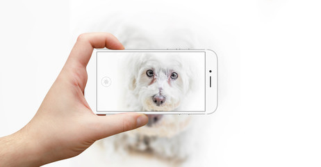 Man taking picture of dog with modern smartphone