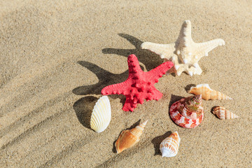 starfish and Shells on sandy beach