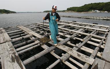 Yutaka Iwaki, a pearl oyster farmer, walks on a raft at his pearl cultivation farm in Shima