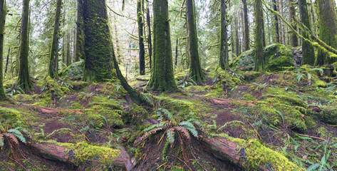 Pacific North West Nature in Rain Forests