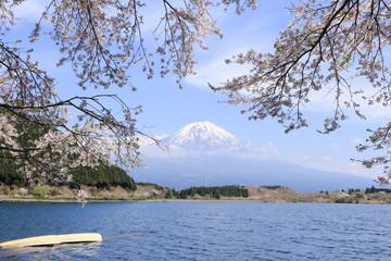 田貫湖 富士山と桜