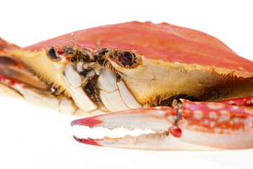 Cooked crab isolated on a white background