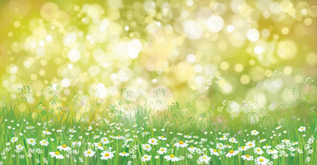 Vector summer nature  background,  blossoming flowers field.
