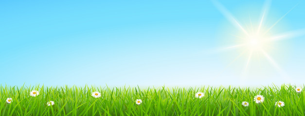 Meadow with sunny sky - Spring/Summer Background