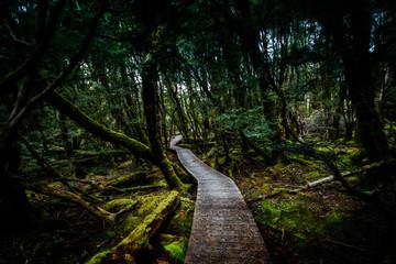 The Boardwalk Wanders Through The Rainforest