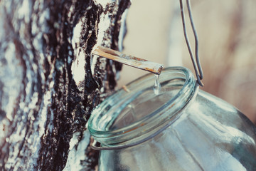 Collecting birch sap in the jar. Selective focus.