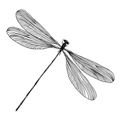 Insect stipple drawing isolated. Dragonfly and bug in trendy embroidery stippling and hatching, shading style. Vector.