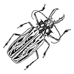 Insect, bug, scarab beetle. Trendy embroidery stippling and hatching, shading style. Stipple art. Vector.