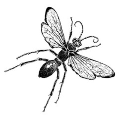Insect stipple drawing isolated honey Bee. Flying bug in trendy embroidery stippling and hatching, shading style. Vector.