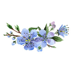 Wildflower cherry flower in a watercolor style isolated.
