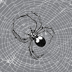 Hand drawn spider on the web. Realistic insect. Vintage stippling and hatching style. Engraved doodle line graphic design for Halloween. Black and white. Vector.