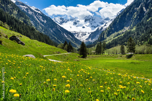 Fototapete Amazing alpine spring summer landscape with green meadows flowers and snowy peak in the background. Austria, Tirol, Stillup valley.