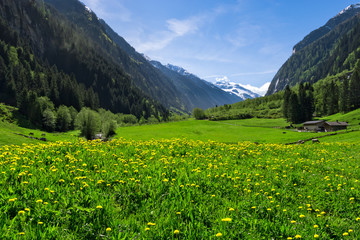 Wall Mural - Austrian landscape with meadows and mountains in the springtime. Austria, Tirol, Zillertal, Stillup valley.