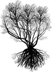 black bare tree with many branches and dense root