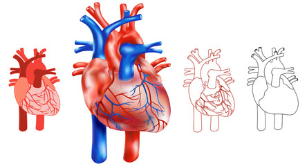 Variationen Aufbau menschliches Herz, Illustrativ - Set aus 4