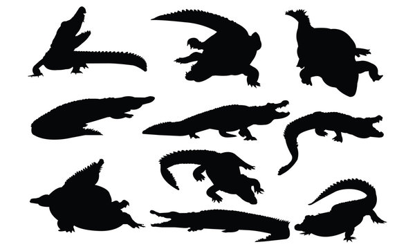 Crocodile Silhouette vector illustration