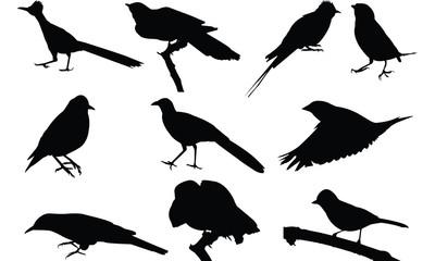 Cuckoo Silhouette vector illustration