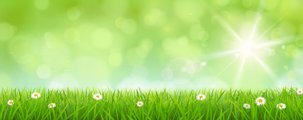 Meadow with blurred sunny sky - Bokeh Spring/Summer Background
