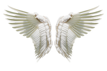 Wall Mural - Internal white wing plumage