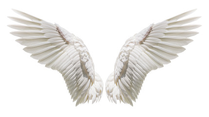 Natural white wing plumage Wall mural
