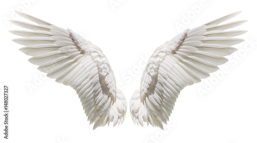 Wall mural Natural white wing plumage