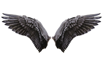 Angel wings, Natural black wing plumage Wall mural