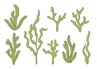 Algae green vector illustration set