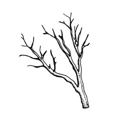 Dry twig vector illustration hand drawing