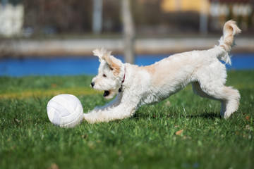 happy mixed breed dog playing with a ball