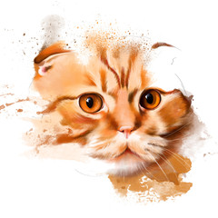 portrait of Scottish fold cat on white background with sketch elements
