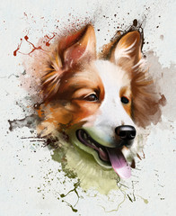 Watercolor portrait dog breed Welsh Corgi, with his tongue hanging out, close up on white background