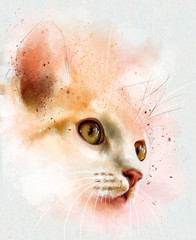 Watercolor animals. Watercolor portrait of white cat, closeup on white background