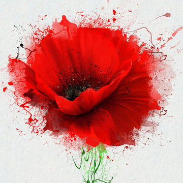 Beautiful red poppy closeup on a white background, with elements of the sketch and spray paint, as an illustration for the cover of the Notepad or notebook, or print on clothing