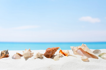 Seashell on the beach. Summer background with white sand
