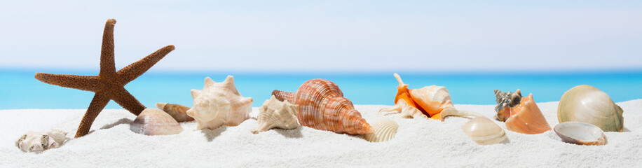 Banner summer background with white sand. Seashell and starfish on the beach.