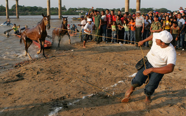 Boatmen pull their horses out of the water during a river-crossing race at a river in San Fernando de Apure