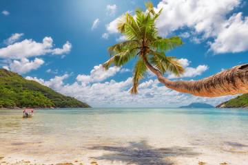 Fototapete - Palm tree on tropical beach. Fashion travel and tropical beach concept.