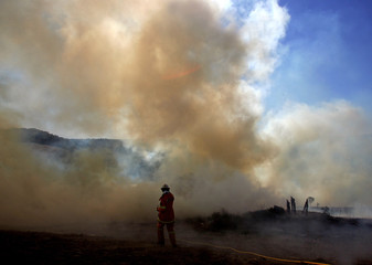 Rural bush firefighter tries to extinguish a fire that was headed towards homes in the northern Sydney suburb of Belrose