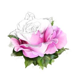 Beautiful delicate pink rose, with elements of sketch, closeup on a white background. As print for clothes