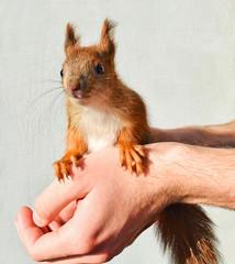 Handy baby squirrel.